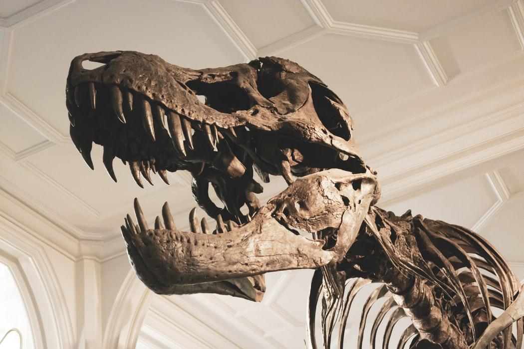 New Tyrannosaurus Found in Canada