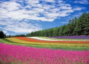 Japan Garden of Flowers