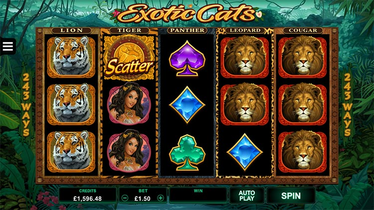 Screenshot of the new Exotic Cats online slot launched by Microgaming