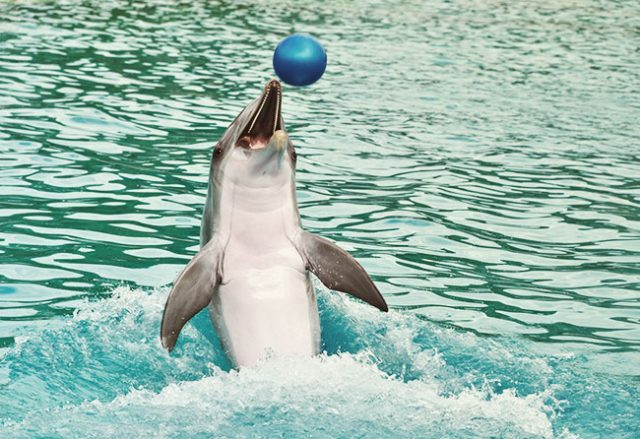 Ban on Whales and Dolphins in Captivity Passes Senate