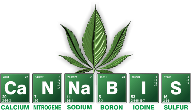 Cannabis for Pain Treatment NHL