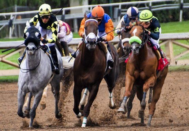 Woodbridge Horseracing