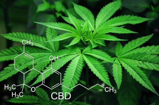 Cannabis Edibles Now Legal In Canada