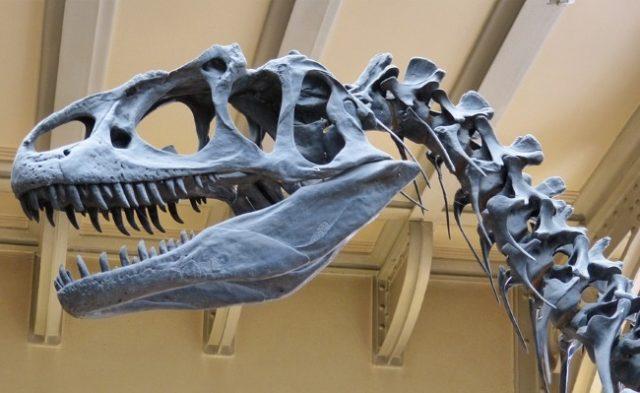 3D Printing Reveals Dinosaur's Secrets