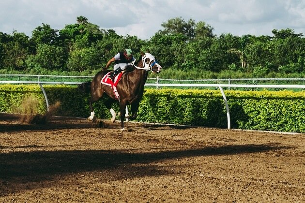 Ontario's LHRA Says About Live Horse Races
