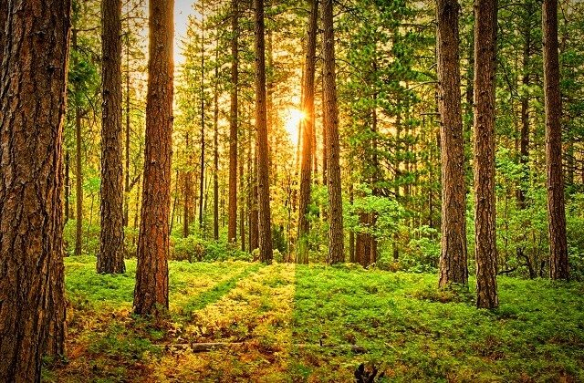 Le Casino Cascades à Delta va planter 500 arbres