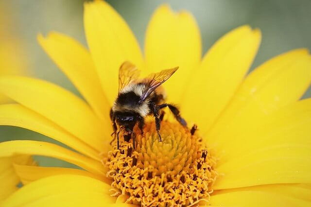 Bee Shortages Affecting Crops In B.C. & U.S.