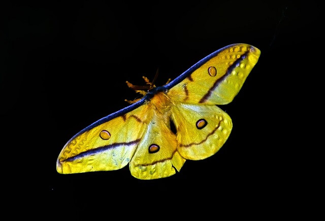 Vancouver's Moth Influx No Cause For Panic
