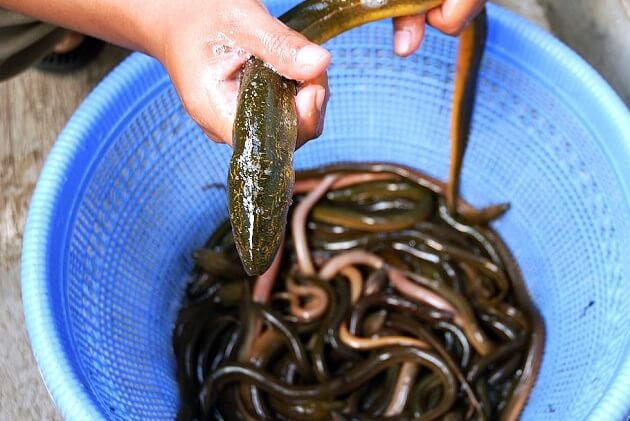 First Nation Stakes Claim To NS Elvers