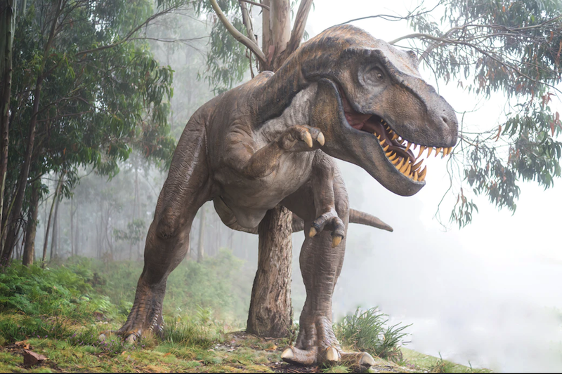 T-Rex May Have Been Built for Long Walks